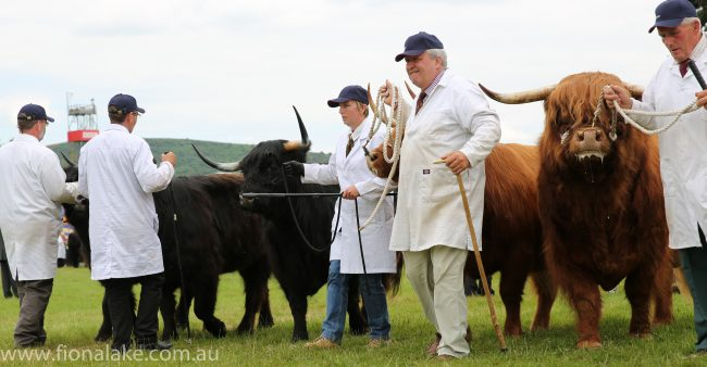 We'll spend the day at the Royal Welsh Show - widely viewed as one of the world's best livestock shows.